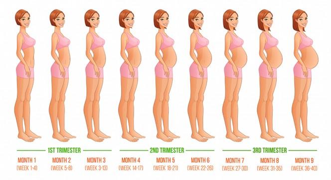 Колко е голямо бебето през различните месеци на бременността?