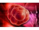 Клетките на кожата стават оръжие срещу рака