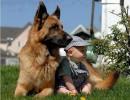 Деца и животни - мили картинки