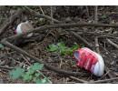 Гръцката полиция разкри чудовищно убийство на 4-годишно българче