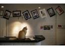Първи петзвезден хотел за котки в света
