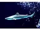 Акула хапе друга в аквариум, вади бебетата й