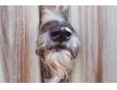 Домашно куче нахапа дете в Пловдив