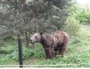 Влюбчив мечок е най-чувственият обитател на парка над Белица