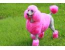 Глобиха жена, че боядисала кучето си розово