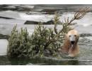 Полярна мечка преплува 687 км за 9 дни в търсене на храна